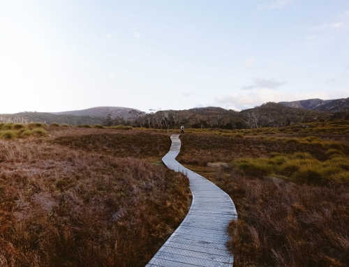 Paving the way for eco-tourism in Tasmania and beyond